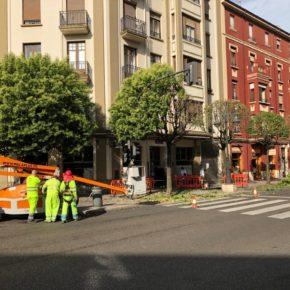 Ciudadanos pide al nuevo equipo de gobierno que paralice la poda en verano para preservar zonas de sombra