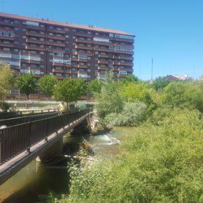 Ciudadanos pide la limpieza urgente de troncos y maleza que invaden el cauce del río Bernesga